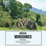 Kawa Świeżo Palona India Robusta Monsooned AA