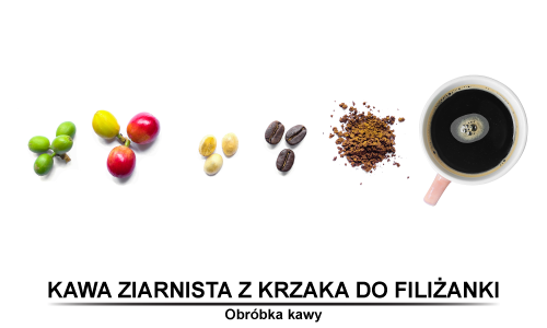 Kawa ziarnista z krzaka do filiżanki